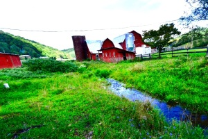 Shipley Family Farm, Vilas, NC.